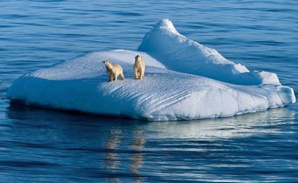 壁纸 动物 海洋动物 桌面 593_366