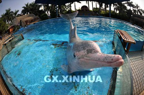 在广西南宁动物园海豚馆
