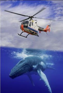 美国一架水上飞机降落水面时差点撞上一头座头鲸