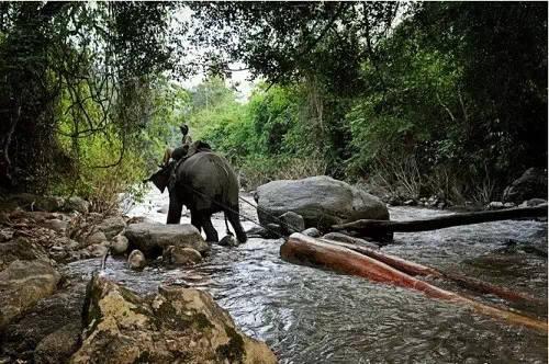 箐再拉到河边是大象拉木头的三个阶段-老挝大象背上的悲伤