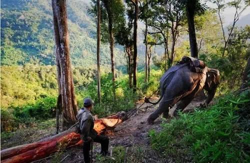 老挝大象背上的悲伤