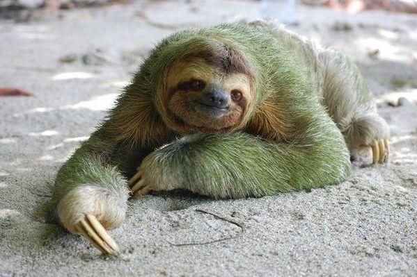 树懒是唯一身上长有植物的野生动物
