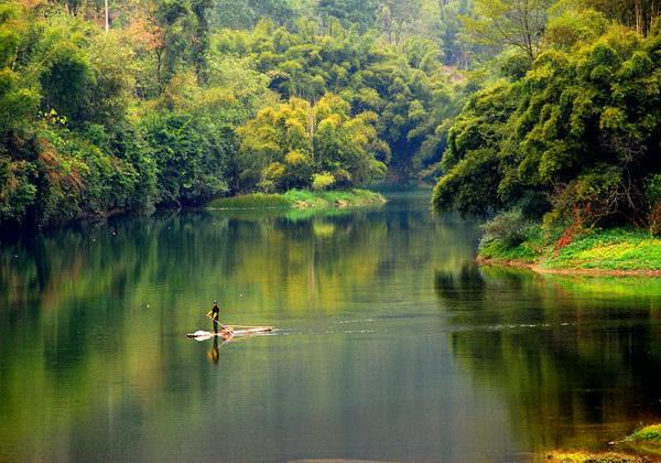 春天大自然山水风景 竹子