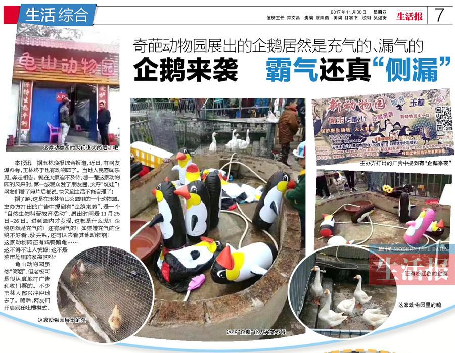"""11月30日,当代生活报曾报道玉林龟山动物园的""""企鹅展""""事件."""
