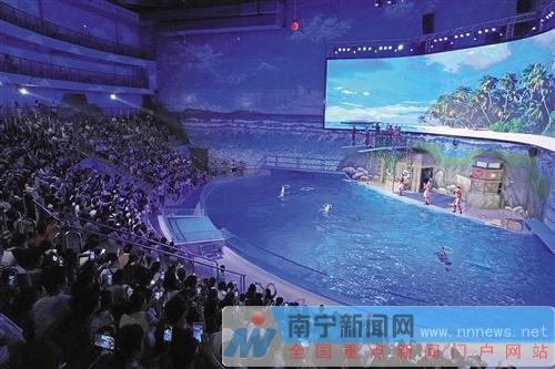 数千市民欢乐畅游 南宁融晟极地海洋世界迎体验高峰