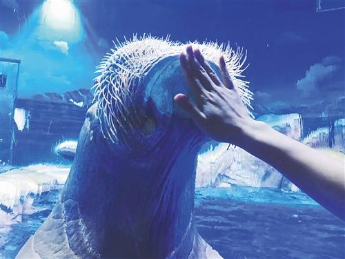 南宁融晟极地海洋世界2万多尾鱼儿以及各种海洋生物到底有多稀奇,有趣